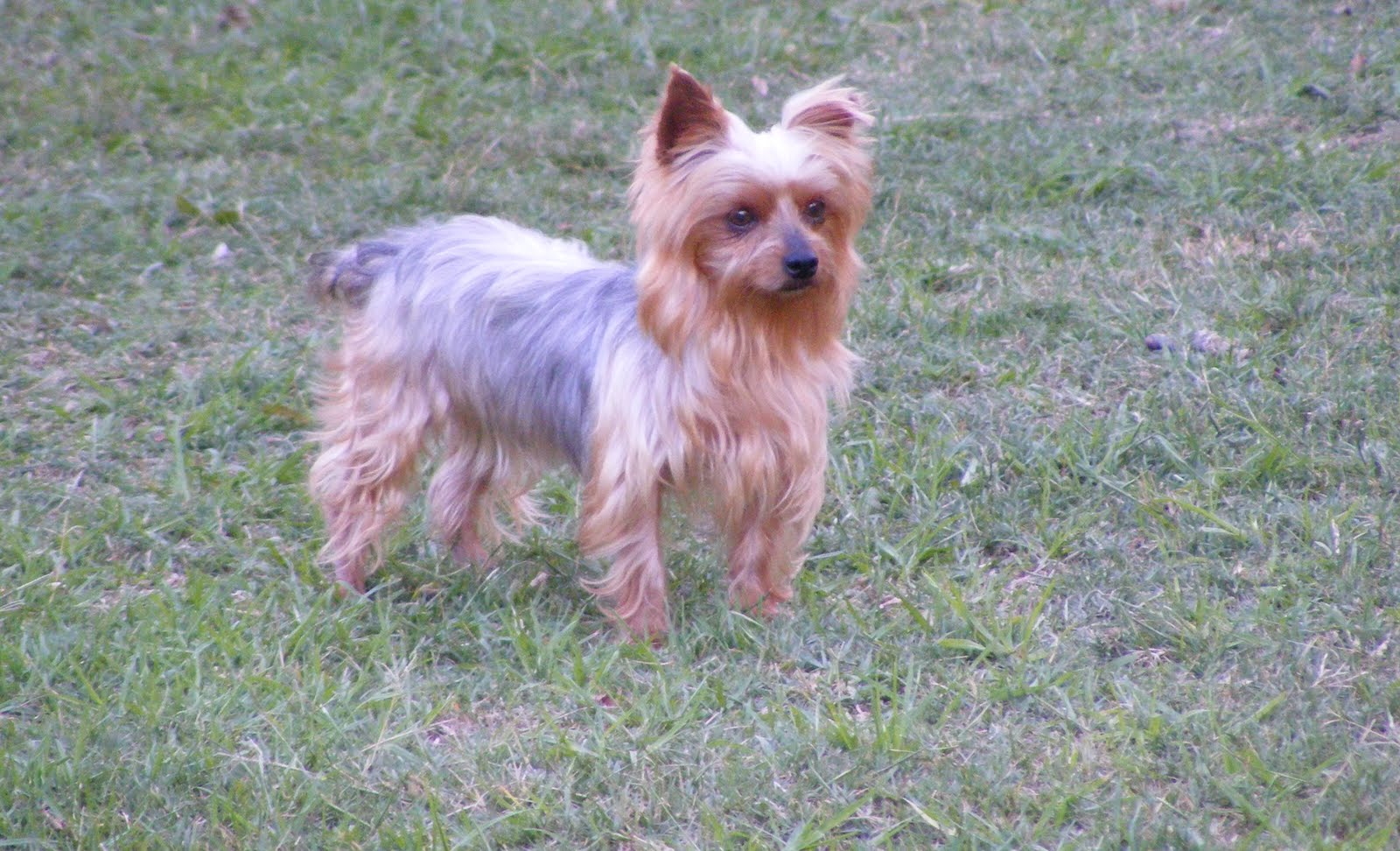Best Dog Kennels In South Yorkshire