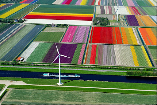 The world from above - Tulip Fields, The Netherlands.jpg