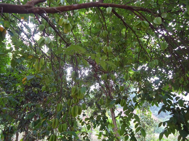 Miệt vườn - Thung Nham