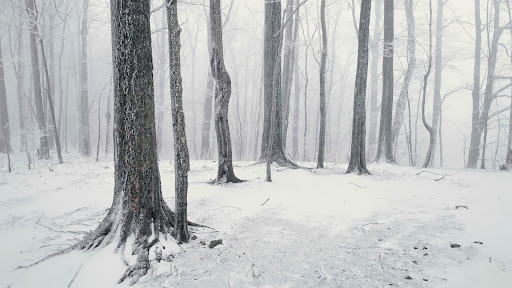 Snow Covered Forest, Great Smoky Mountains, Tennessee.jpg