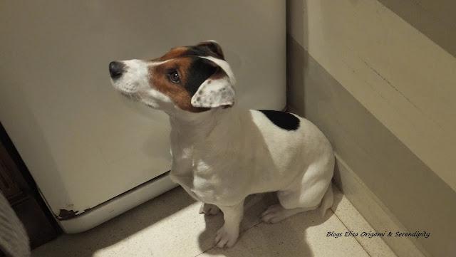 Jack Russell Terrier, Buenos Aires, Argentina, Elisa N, Blog de Viajes, Lifestyle, Travel
