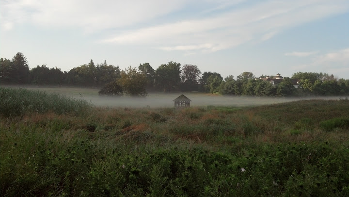 Mist on the field at Nyala Farms.