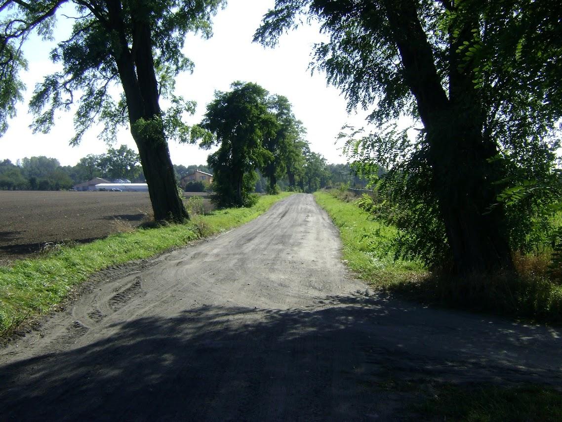 droga do Mikołajewic