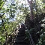 Climbing up the Casuarina Stairway (132181)