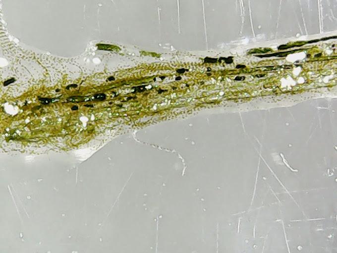 Ma microfaune en 50x 1129-12