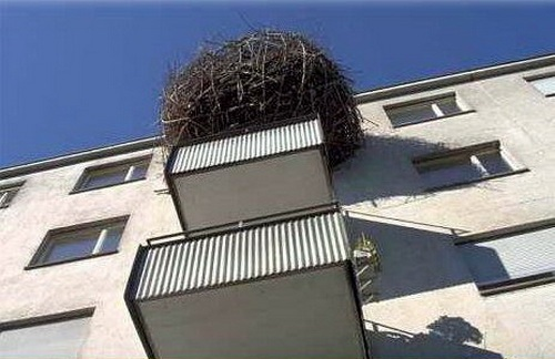 Humans Make Nest Just Like Bird -- imroee