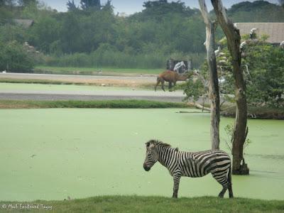 Safari World - Safari Park Bangkok Photo 4