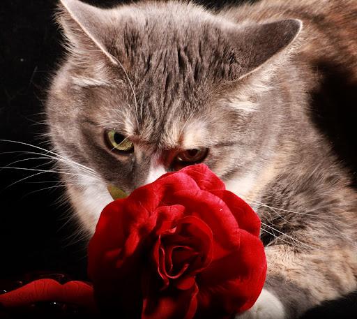 Amo mi Gatito