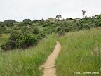 Phylis Ellman Trail