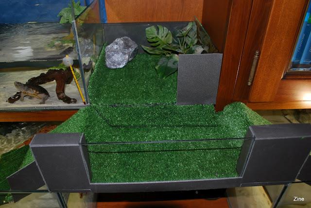Vasche comunicanti per malaclemys for Vasche da interrare per tartarughe