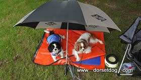prestige cool dog cooling coat keeps the hot dog happy