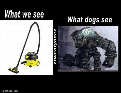 photo of a vacuum and a monster: what we see and what a dog sees