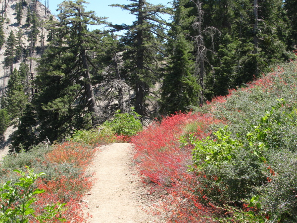 a field of red on either side of the trail