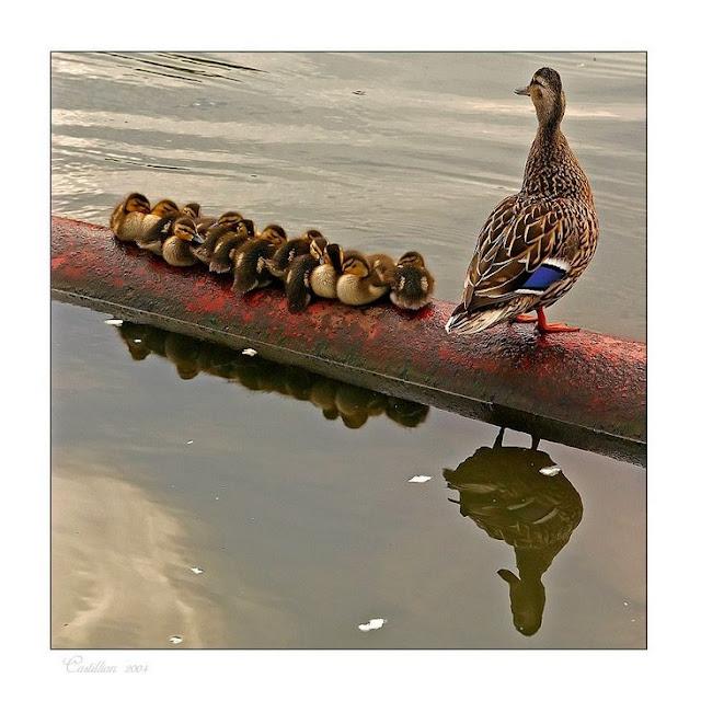 duck%2525202.jpg