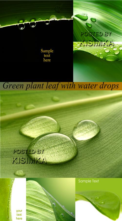 Stock Photo: Green plant leaf with water drops
