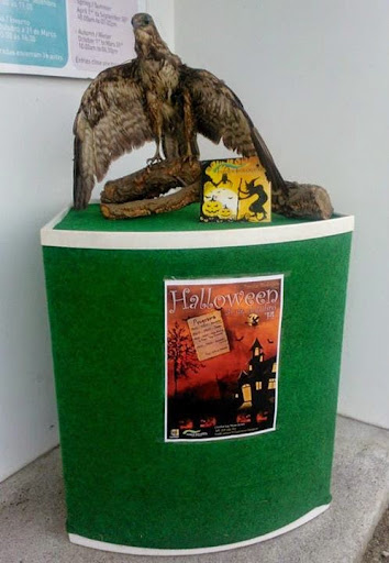 Bruxas à solta no Halloween do Parque Biológico