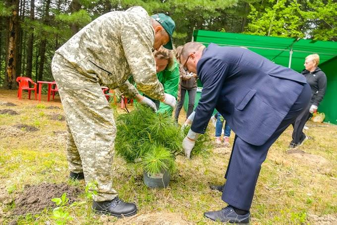 Более двухсот молодых сосен высадили в столице Югры