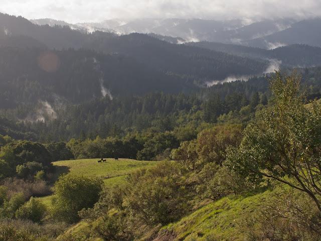 Santa Cruz Mountains Clearing Storm