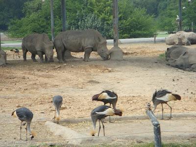 Safari World - Safari Park Bangkok Photo 8