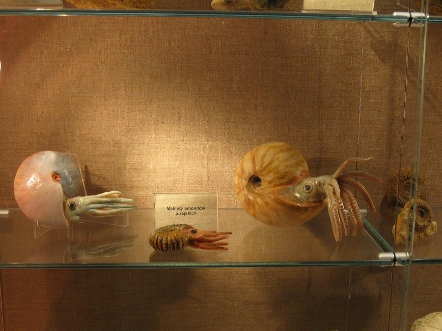 Eksponaty w muzeum OPN