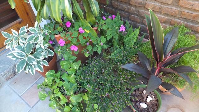 Flores de Palo de Agua, Rosario, Argentina, Elisa N, Blog de Viajes, Lifestyle, Travel