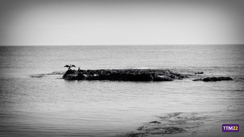 Nikon D5100, Blanco y negro, Paisajes, Naturaleza, Rocas, Mar, Horizonte, Fauna, Cormoranes, Alicante, Cabo de la Huerta, Calas, 18-55 mm,