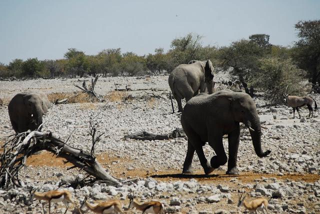 أفضل ما في أفريقيا  Best of Africa Namibia_180807120910