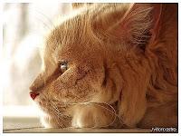 gatos gatinhos fofos lindos gatos animais filhotes