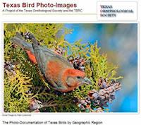 http://www.texasbirdimages.com/