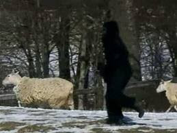 Lelaki menyamar Bigfoot mati dilanggar