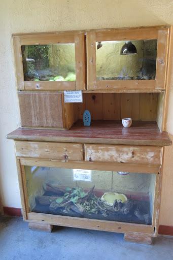 Im Küchenschrank lebt u.a. eine Vogelspinne