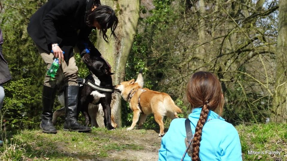 Balades canines en Nord (59)/Pas de Calais (62) - Boulogne-sur-Mer, Calais et Lille - Page 4 DSC01846