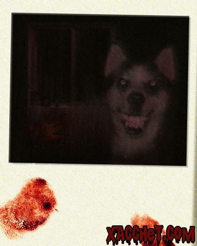 https://lh6.googleusercontent.com/-UMxznJ7Oedc/UUWuEcjba7I/AAAAAAAAC7o/85rg499oS6k/s1024/Xacchet.Com-Smile.dog_.jpg