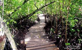 Mangrove in Jozani