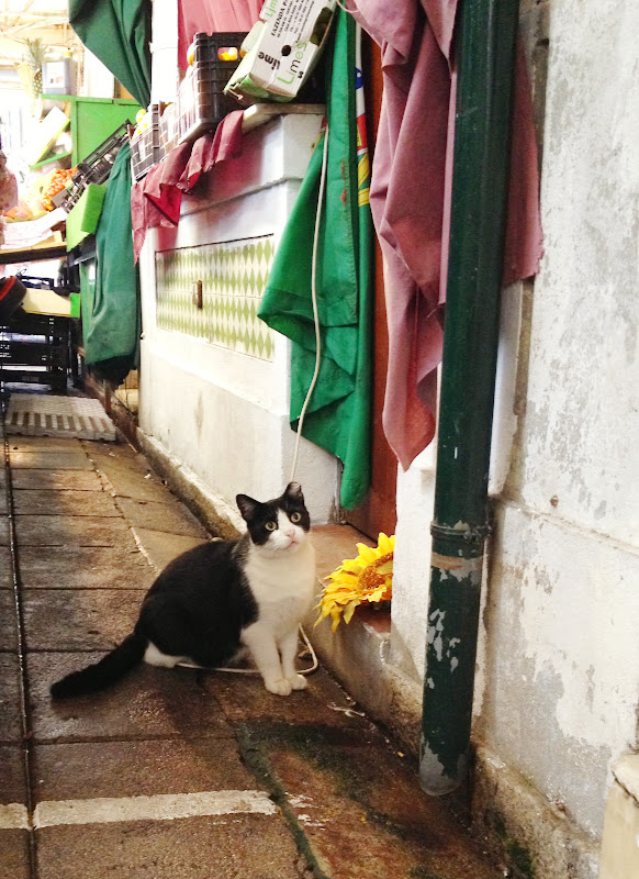 Neighborhood kitty in Porto