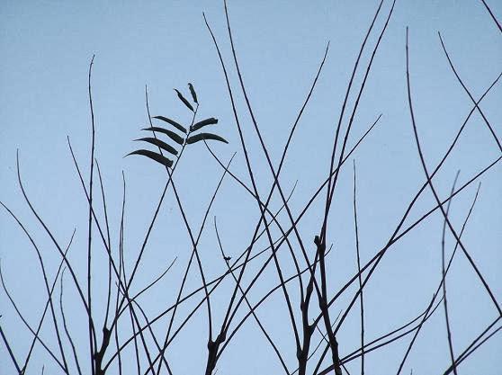 силуэты деревьев