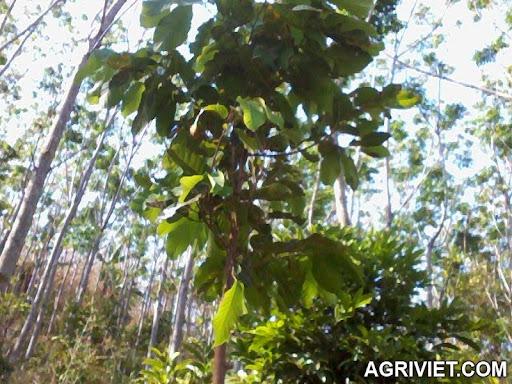 Agriviet.Com-Photo0860.jpg