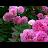Iris Cai avatar image