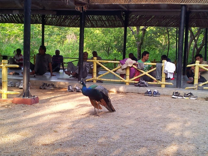 Yoga Center At Kasu Brahmananda Reddy National Park