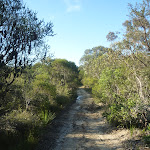 The sandy Wilkin's Track near Terrey Hills (307436)