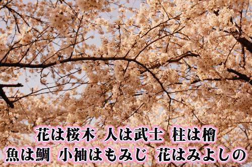 花は桜木 人は武士 柱は檜 魚は鯛 小袖はもみじ 花はみよしの