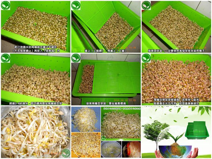 綠豆,綠豆的功效,綠豆子,韓式涼拌豆芽菜食譜,綠豆精力湯,種綠豆,發綠豆芽,如何發綠豆芽,炒豆芽菜,種綠豆生長過程