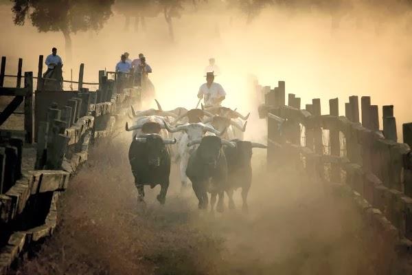 Territorio Toro en Sevilla