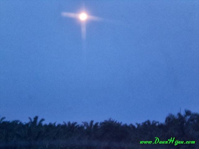 Daun hijau dan malam (2)
