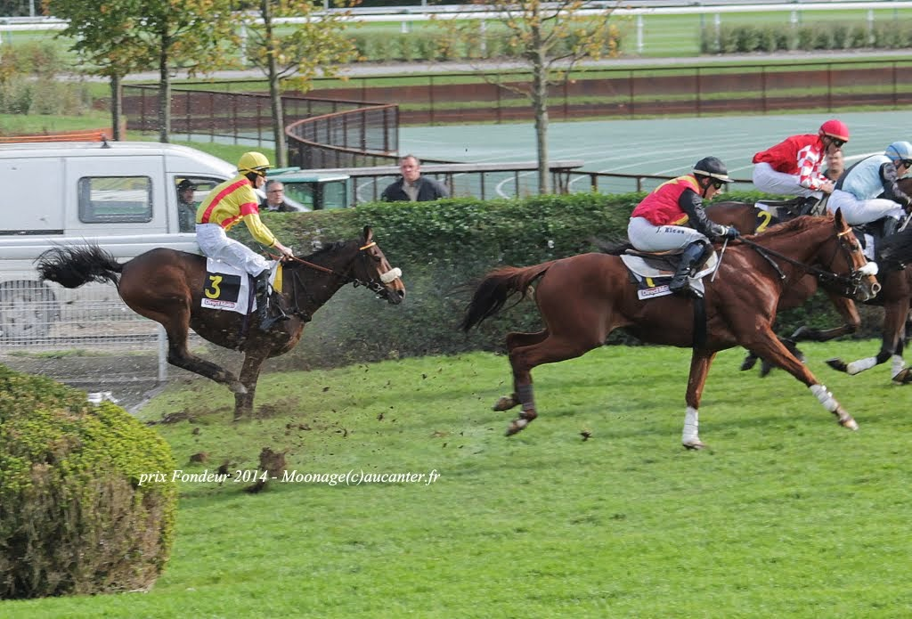Photos Auteuil 2-11-2014 (48h de l'obstacle) IMG_5282