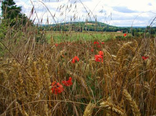 Doing Your Own Thing For Lammas