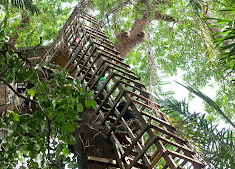 Lekki Conservation Centre Tree-House
