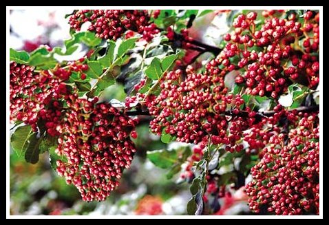 The True Taste Of China Numbing Pepper 花椒