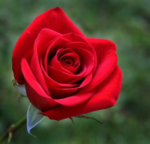 Hermosas Flores de Amor