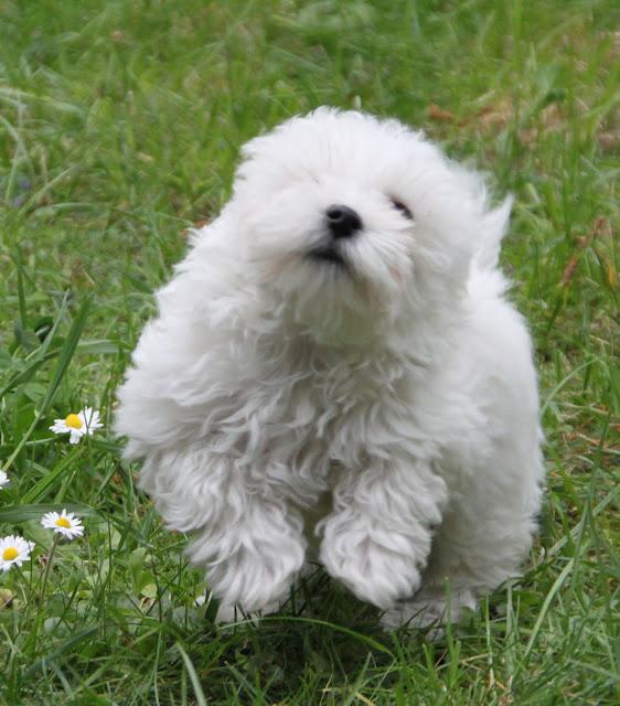 Das ist Flocke, der treue Magier-Hund. Er folgt seinem Herren dem SimsalaSEO auf Schritt und Tritt.